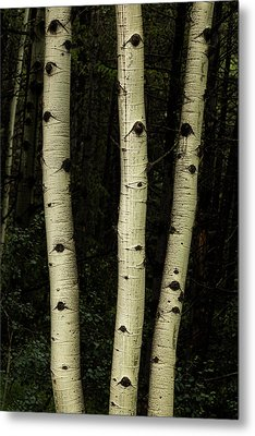 Metal Print featuring the photograph Three Pillars Of The Forest by James BO Insogna