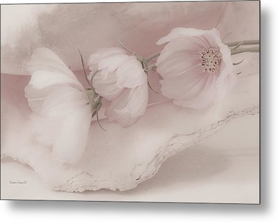 Three Pink Cosmo Flowers Metal Print by Sandra Foster