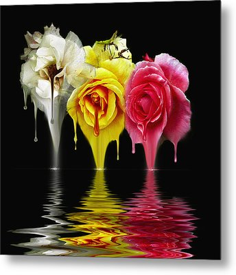 Tears Of Roses Metal Print by Gordon Engebretson