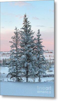 Three Trees Metal Print by Ronda Kimbrow