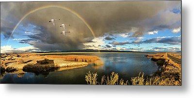 Three Tundra Swans And A Rainbow Metal Print by John Williams