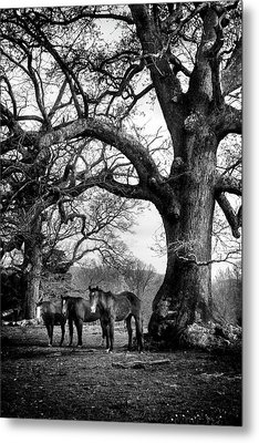 Three Under A Tree In Black And White Metal Print by Greg Mimbs