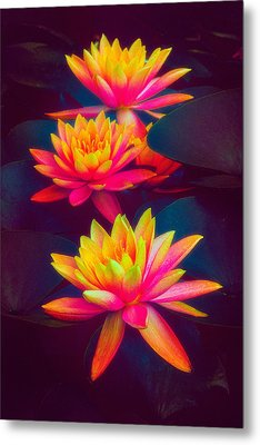 Metal Print featuring the photograph Three Waterlilies by Chris Lord