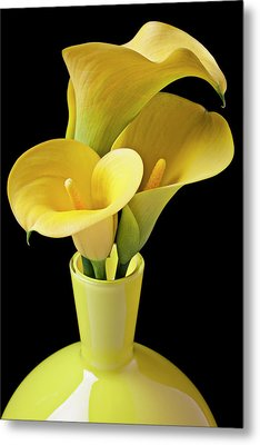 Three Yellow Calla Lilies Metal Print by Garry Gay