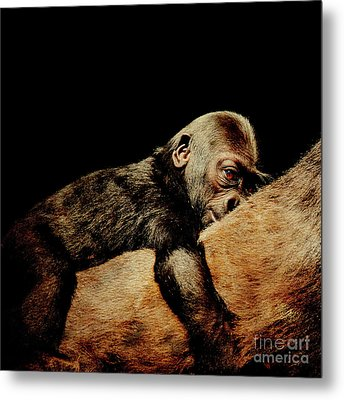 Through The Eyes Of Hasani . Square Metal Print by Wingsdomain Art and Photography