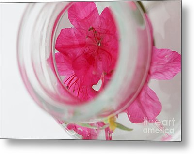 Through The Looking Glass Metal Print by Amanda Barcon