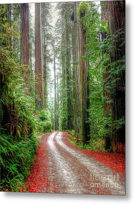 Through The Redwood Forest Metal Print by Juli Scalzi