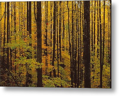 Through The Yellow Veil Metal Print