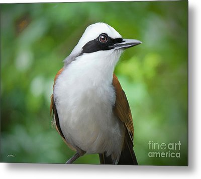Thrush Pose Metal Print