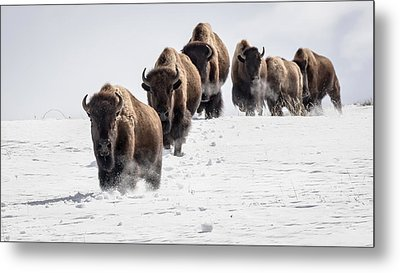 Thunderbeast Metal Print by Jack Bell