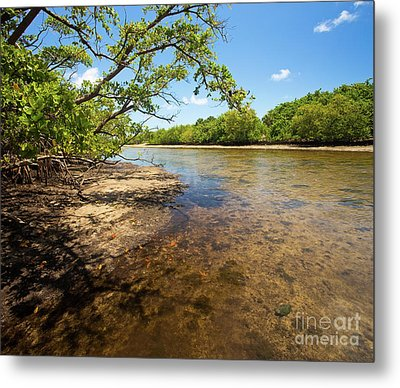 Tidal Mangrove Estuary - Von D Mizell Eula Johnson State Park Metal Print