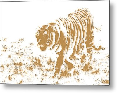 Tiger 2 Metal Print by Joe Hamilton