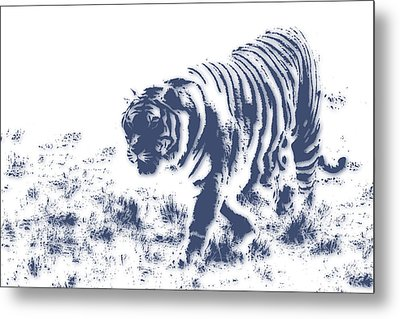 Tiger 3 Metal Print by Joe Hamilton