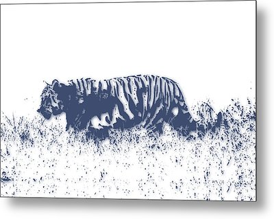Tiger 4 Metal Print by Joe Hamilton