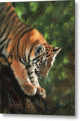 Tiger Cub Climbing Down Tree Metal Print