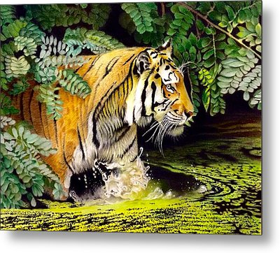 Tiger In The Sunderban Delta Metal Print