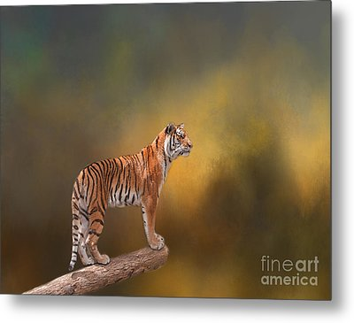 Tiger Metal Print by Kathleen Rinker
