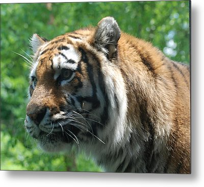 Metal Print featuring the photograph Tiger Profile by Richard Bryce and Family
