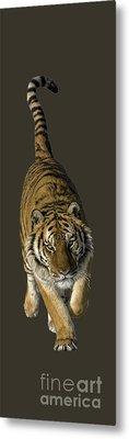 Tiger Running Metal Print