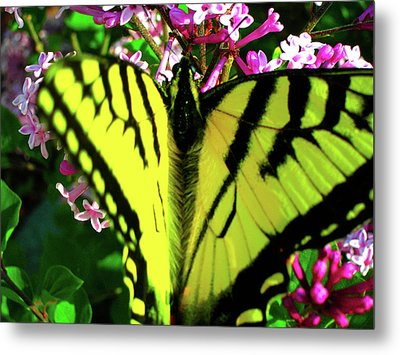 Tiger Swallowtail On Lilac Metal Print by Randy Rosenberger