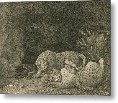 Tigers At Play Metal Print by George Stubbs