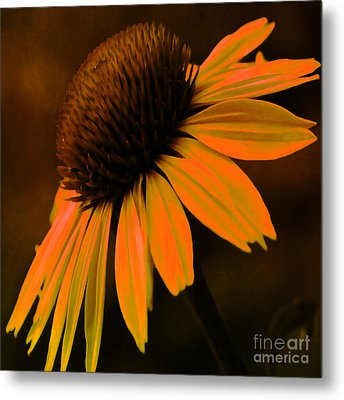 Tiki Torch Coneflower Metal Print by Beverly Guilliams
