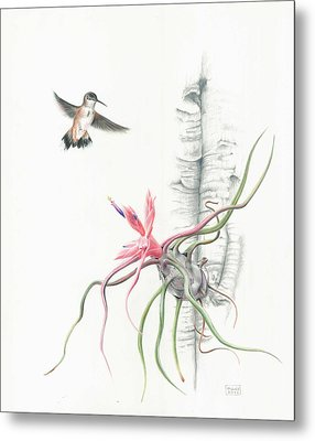 Tillandsia Bulbosa With Hummingbird Metal Print