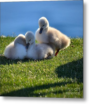 Time To Snuggle Metal Print by Deb Halloran