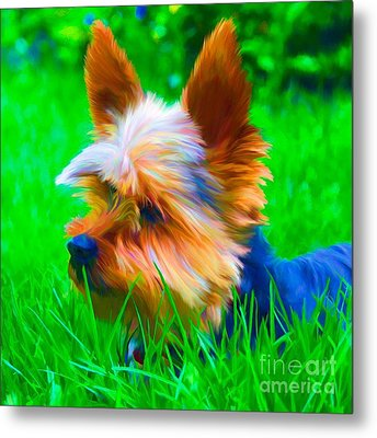 Tinky Metal Print by Suzanne Batchelor