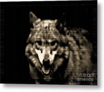 Metal Print featuring the photograph Tinted Wolf by Debra     Vatalaro