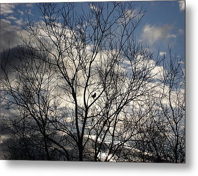 Tiny Bird Metal Print
