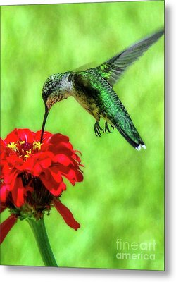 Tiny Feet II Metal Print by Sue Melvin