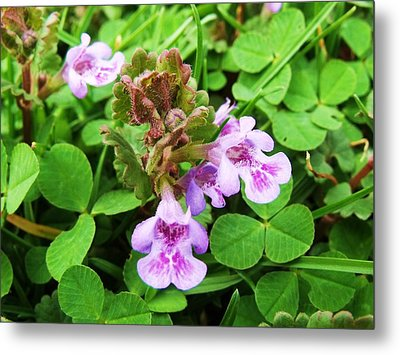 Tiny Flowers I Metal Print by Anna Villarreal Garbis