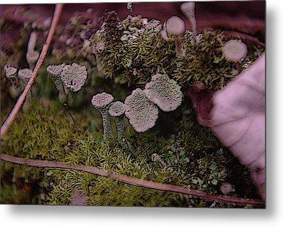 Tiny Mushrooms  Metal Print by Jeff Swan