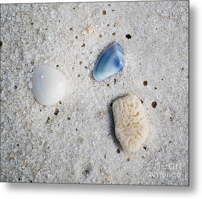 Tiny Sea Shells And A Piece Of Coral In Fine Wet Sand Macro Metal Print