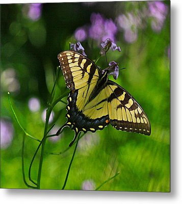 Tiny Wings Metal Print by Robert Pearson