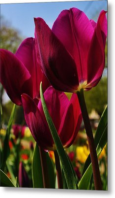 Tip Toe Through The Tulips Metal Print by Bruce Bley