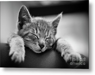 Tired .... So Tired Metal Print by Alessandro Giorgi Art Photography