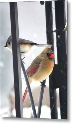 Titmouse And Cardinal Metal Print by Diane Merkle