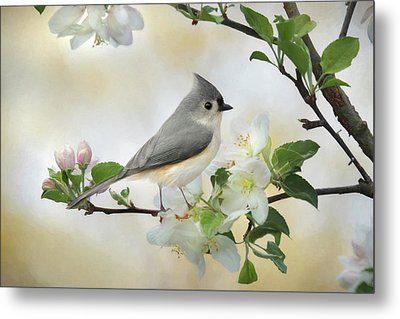 Titmouse In Blossoms 1 Metal Print by Lori Deiter