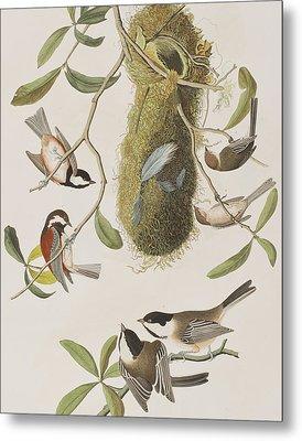 Titmouses Metal Print by John James Audubon