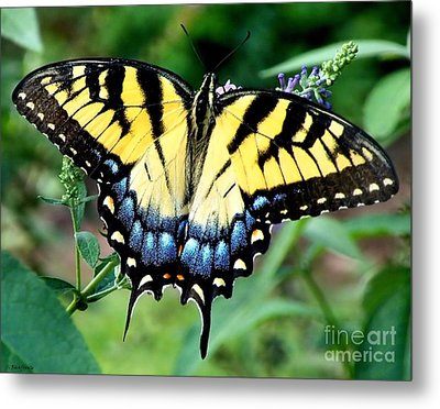 To Be Admired Metal Print by Christy Ricafrente
