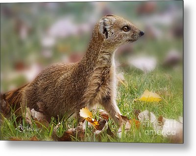To Close For Your Own Safety Metal Print by Adelita Rog