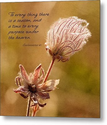 To Everything A Season Metal Print by Mary Jo Allen