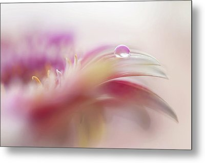 Metal Print featuring the photograph To Live In Dream 2. Macro Gerbera by Jenny Rainbow