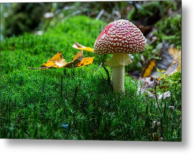 Toadstool Metal Print by Andreas Levi