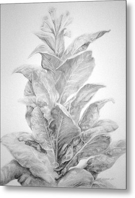 Tobacco  Metal Print