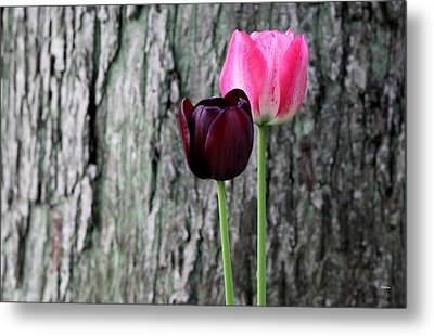Together Metal Print by Deborah  Crew-Johnson