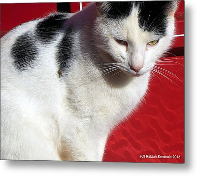 Tom Barn Cat  Metal Print
