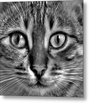 Tom Metal Print by Russell Styles